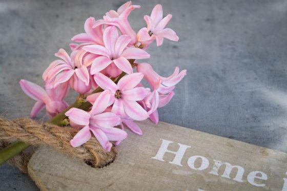 hyacinth-1403159_1280